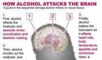 Alkohol i naš mozak