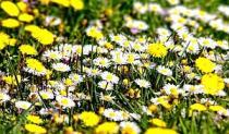 Alergije - Kako preživjeti proljeće?