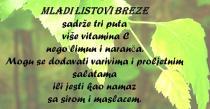 Breza - Drvo izuzetne ljekovitosti